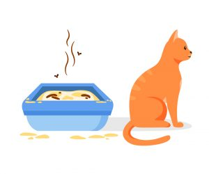 How to Keep A Litter Box From Smelling
